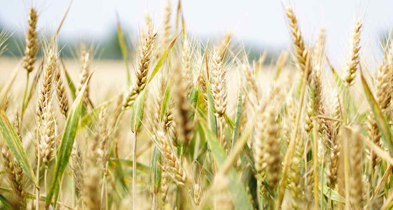 Agroturismo en Almagro